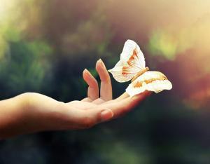 butterflies_and_hurricanes[1]