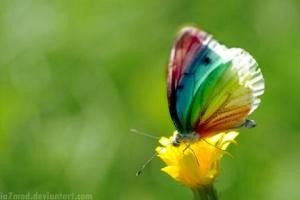 flying_rainbow_by_ia7mad[1]