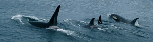 whale-tail-31[2]
