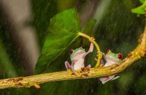 natural-umbrella-shelter-rain-animal-photography-8__880[1]