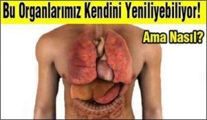 organlar[1]