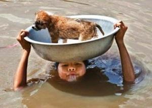İnsanların-Yardımseverliği-ile-Kurtarılan-20-Hayvan-15[1]