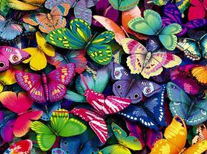kelebek-resimleri5[1]