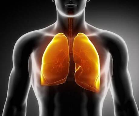akciğerler[1]