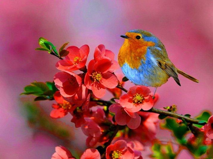 473863__little-bird-on-a-spring-branch_p[1]