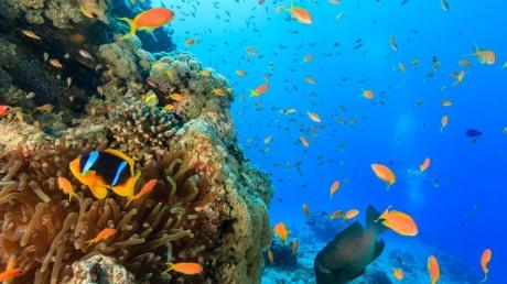 coral_mercan_main[1]
