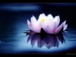 lotus.7[1]