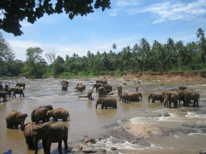 srilanka 154