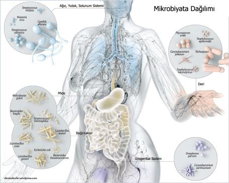 mikrobiyata011