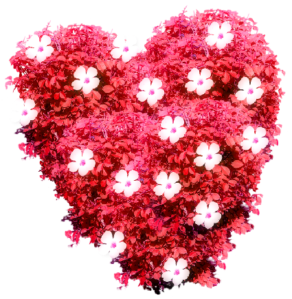 cicek_flower_heart_kalp_png_12_11