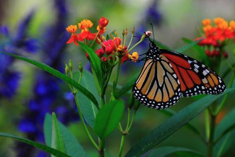 beautiful-butterfly-colors-flowers-favim-com-22729701