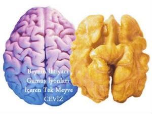 Beynin-İhtiyacı-Gümüş-İyonları-İçeren-Meyve[1]