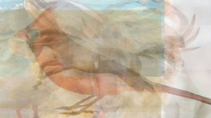 hayvan-testi[1]
