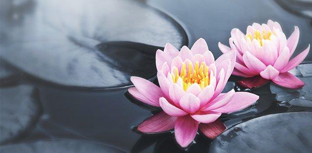Lotus-1[1]