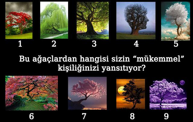 Bu-ağaçlardan-hangisi-sizin-mükemmel-kişiliğinizi-yansıtıyor-test[1]