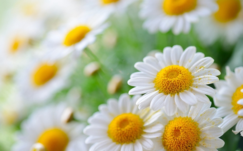 new-nature-wallpapers-3[1]