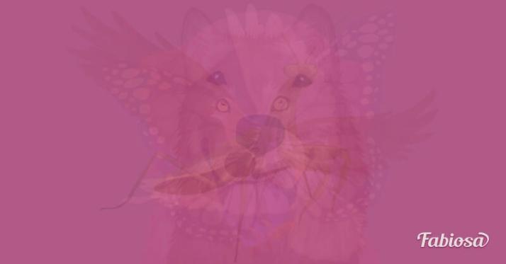 filoji-hayvan-testi[1]