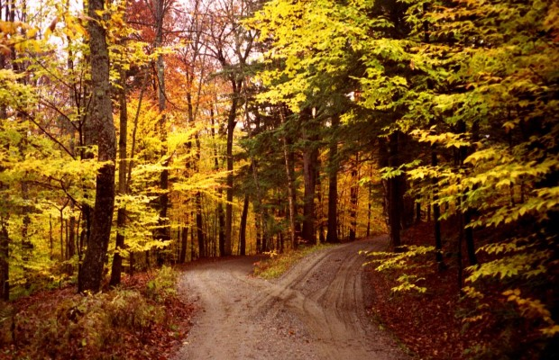two-roads-in-a-yellow-wood-e1428693755196-620x400[1]