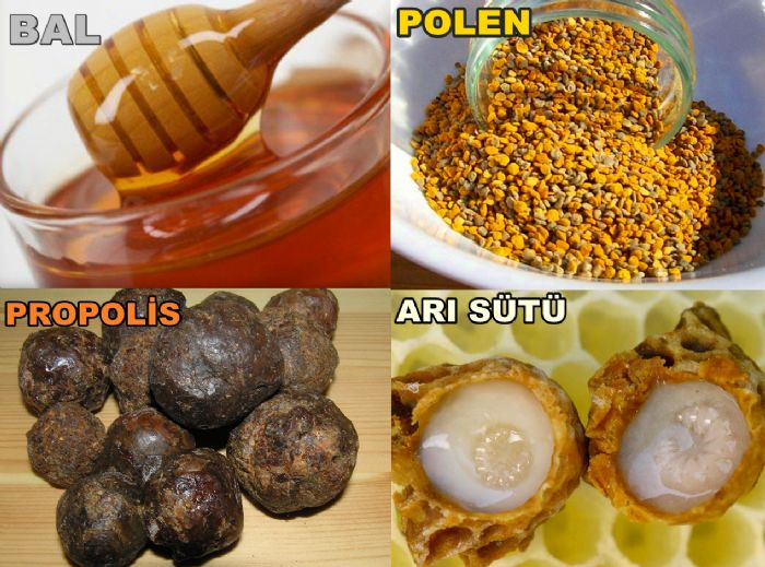 Bal-polen-propolis-arı-sütü[1]