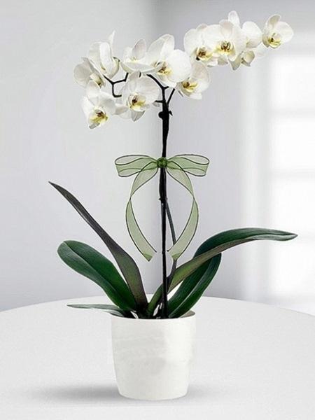 tek-dal-beyaz-orkide_lg[1]