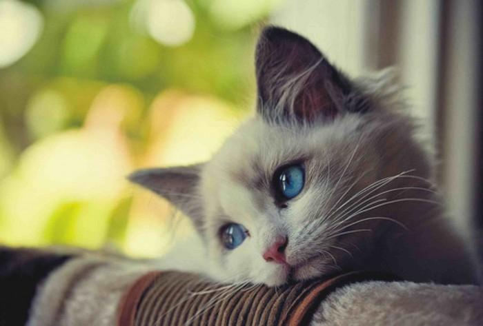 Kediler-Neden-Mutsuz-Olur[1]