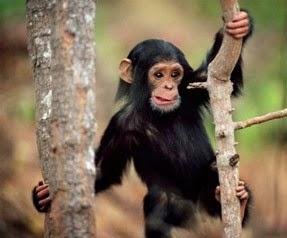 anette inselberg maymunlar bile ağaçtan düşer