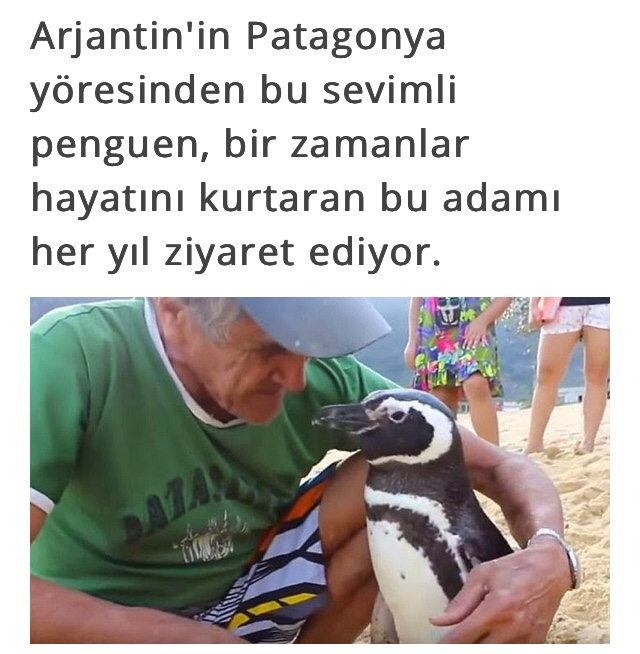 anette inselberg penguen güzel ruhlar