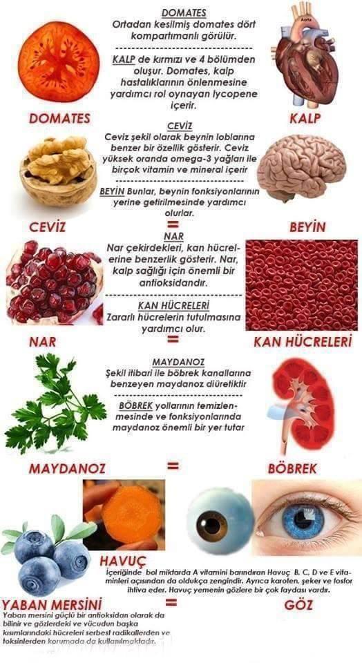 anette inselberg besinler organlar neye iyi grlit
