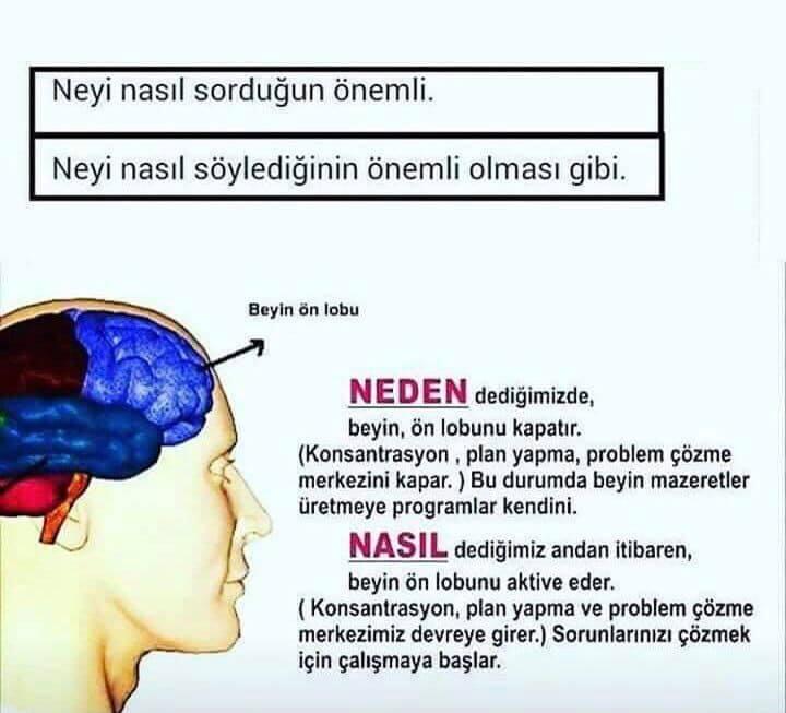 sağ beyin sol beyin anette inselberg